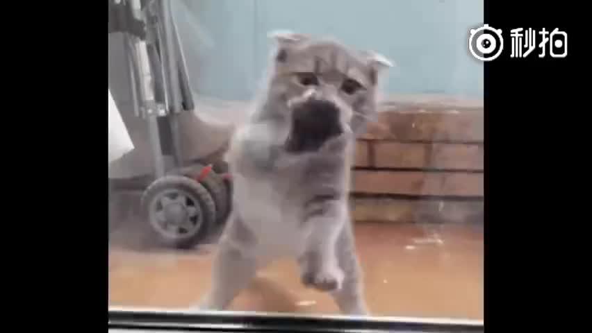 """传说中蜜汁魔性的""""猫舞"""",不由自主就动起来了!"""