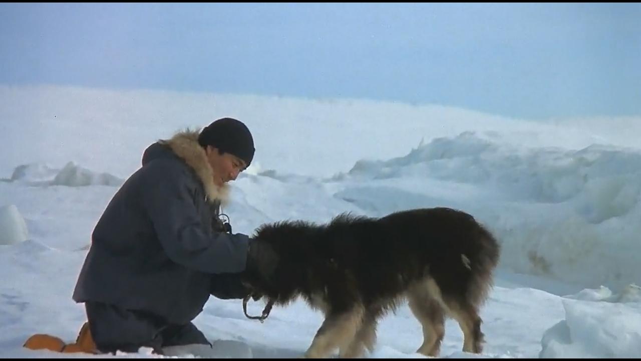 #经典看电影#15只狗狗被人类无情丢弃在南极,时隔一年主人再来寻找只剩2条