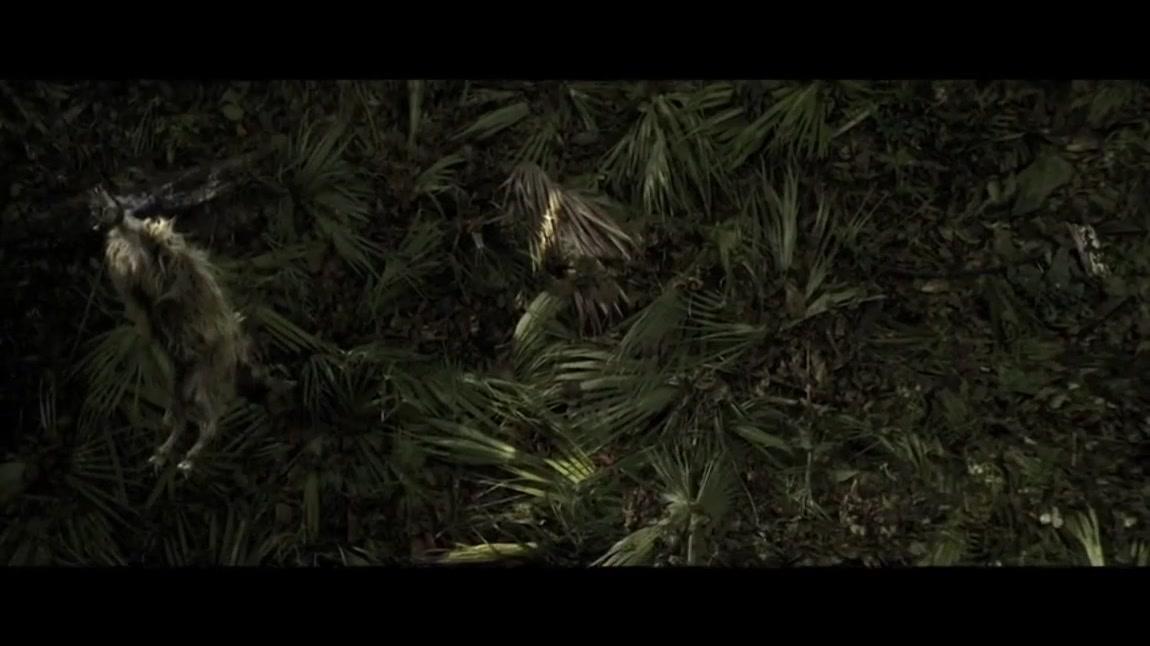 #追剧不能停#这男的比武松还霸气,森林里把豹子杀了
