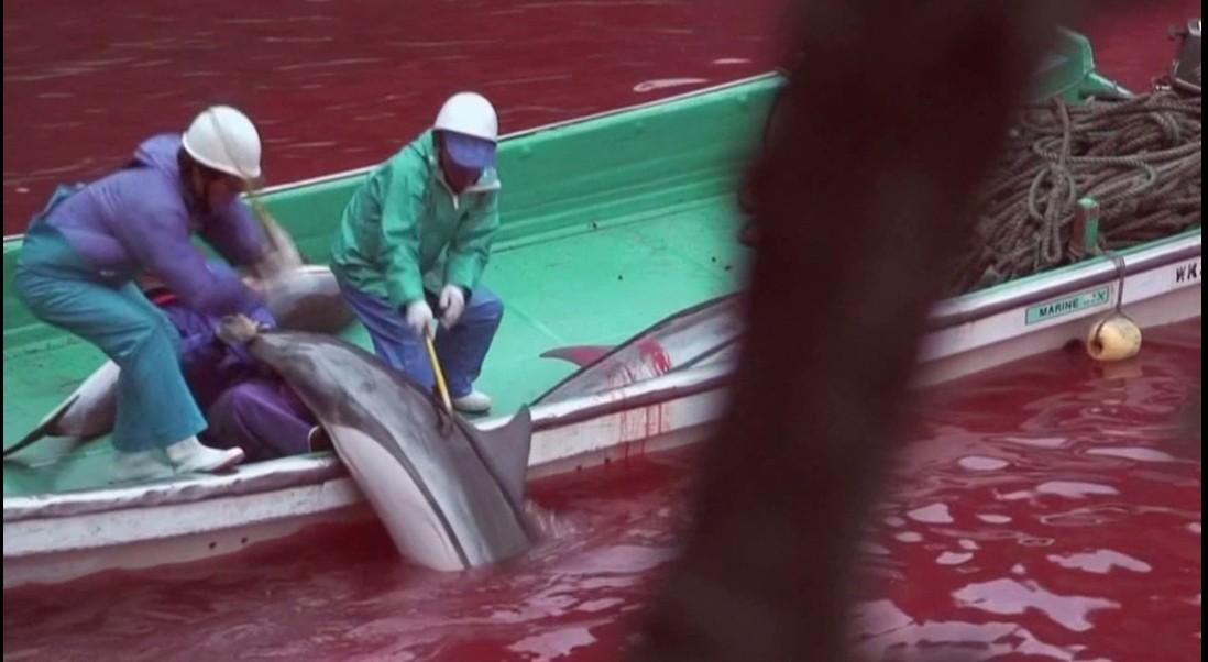 #扁豆看电影#卧底偷拍日本人屠杀海豚,他们拿命险拍了部9.3分纪录片