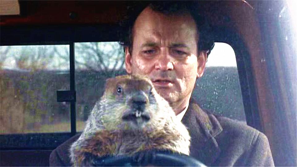 #经典看电影#尴尬这一天将无限循谁也走不出去!5分钟看《土拨鼠之日》