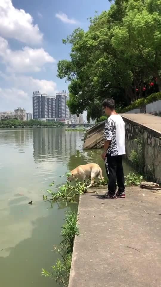 #宠物#狗:掉下去的那一刻我是崩溃的,怎么那么多水喝