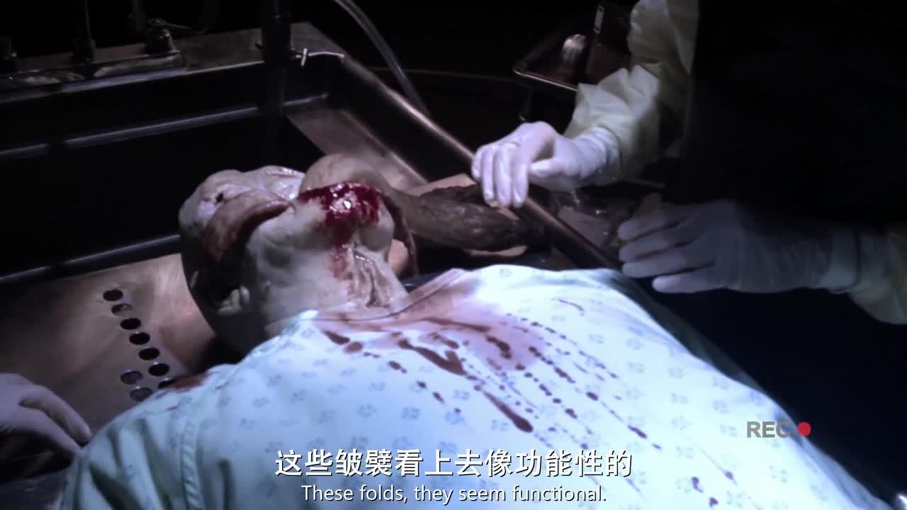 #精彩大片#男子解刨尸体却发现,男子的生殖器官退化掉了,真的这么屌吗