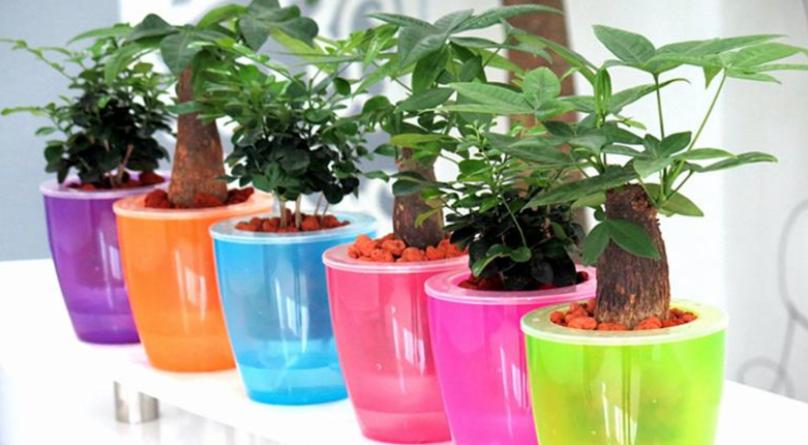 #自动浇水花盆的制作#花盆不用再买啦,用塑料瓶制作花盆,自带浇水功能,比买的更好看