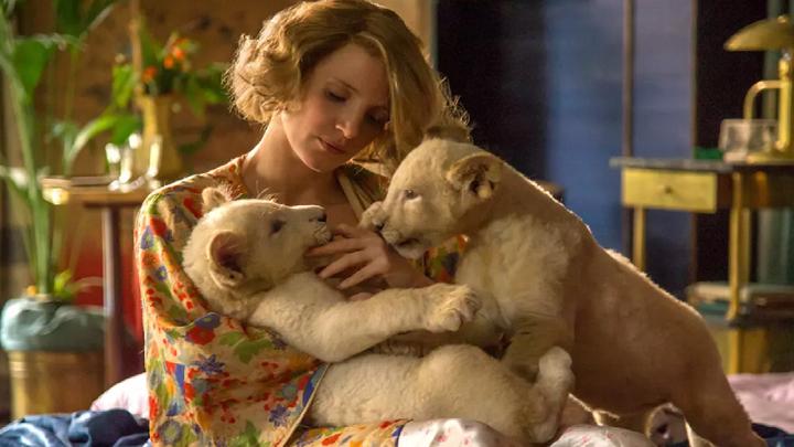 #经典看电影#速看《动物园长的夫人》利用动物园作为掩护拯救犹太人的故事!