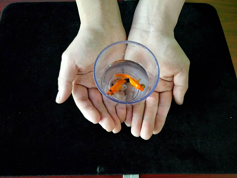 #魔术教学#刘谦表演过的空手大变金鱼,藏在哪里?原来机关是这样!