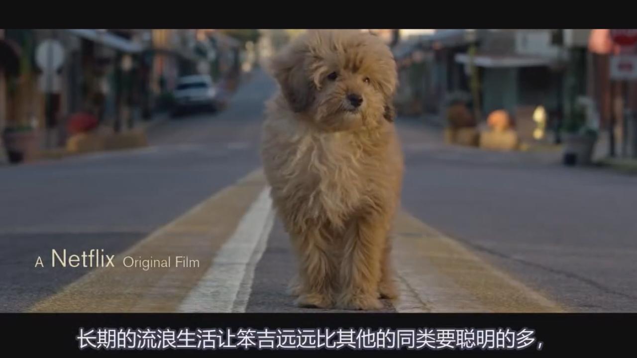 #经典看电影#8分钟看完喜剧温情电影《神探狗笨吉》,美国流浪狗真的很聪明!