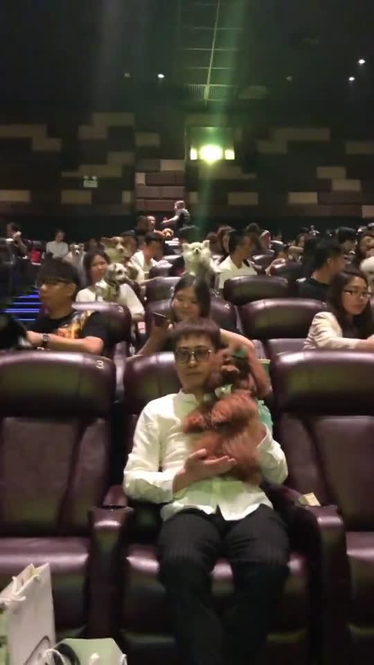#动物#带狗狗看电影专场《一条狗的使命2》