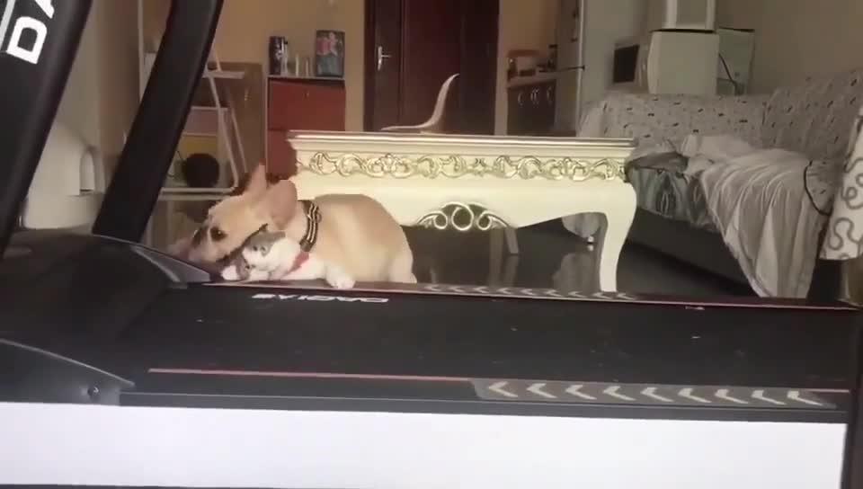 这狗舒服的摇头晃脑