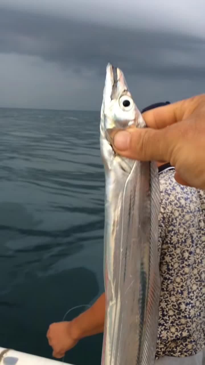 #活的带鱼#人生中第一次见到活的带鱼,没见过活的赶紧进来!
