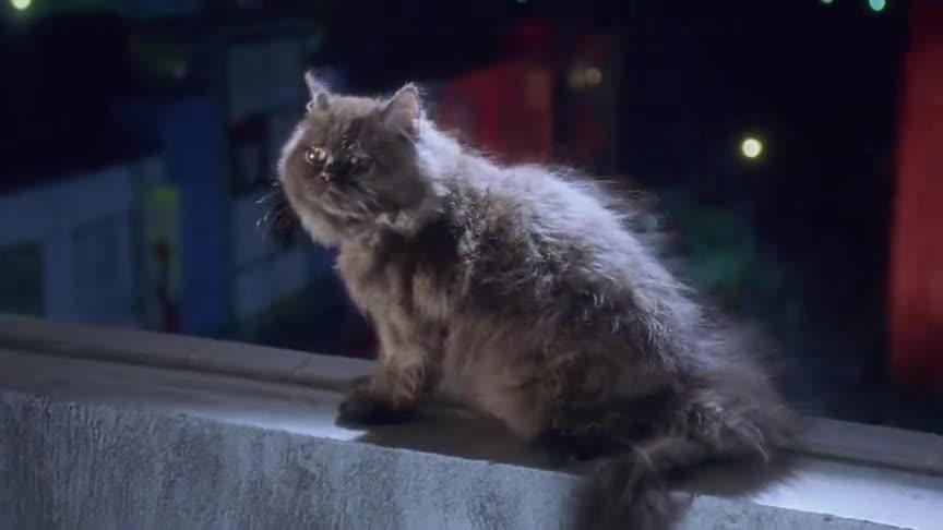 夺舍女子跳楼与猫咪互换灵魂,猫成了人,会怎么样