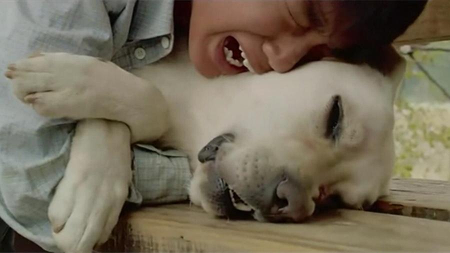 #经典看电影#忠诚狗狗遭主人抛弃,却选择不离不弃,最后为了救主人自己却丧命