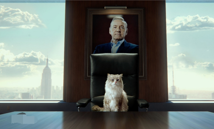#经典看电影#几分钟看完奇幻喜剧电影《九条命》,霸道总裁变成猫是什么体验
