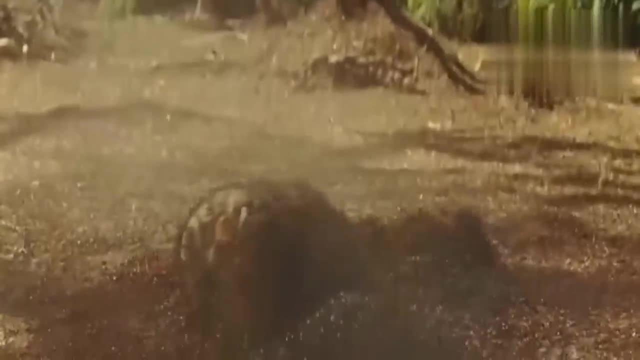 #电影片段#非洲巨蚁会爬高,树上吊着一个求生的女子