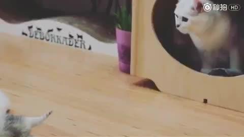 猫妈刚一眯眼,发现宝宝全跑了,又得一只只叼回去