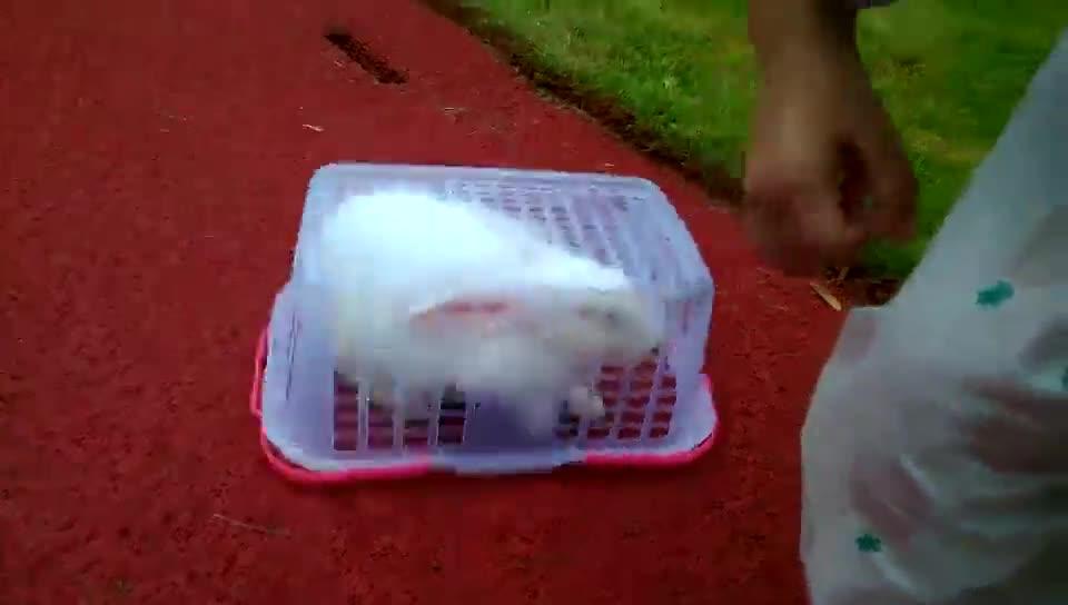 #搞笑趣事#用篮子盖住小白兔,看它怎么破!