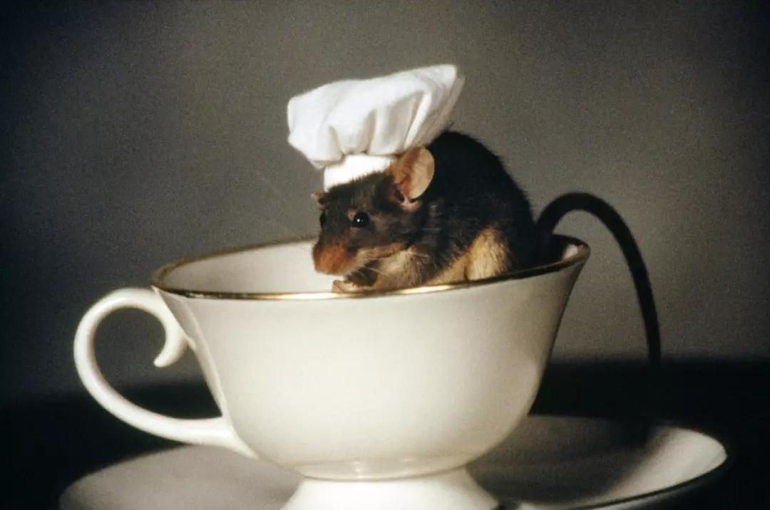 #经典看电影#一部美国奇幻喜剧电影,小伙惹怒一只老鼠,改变了自己的一生!