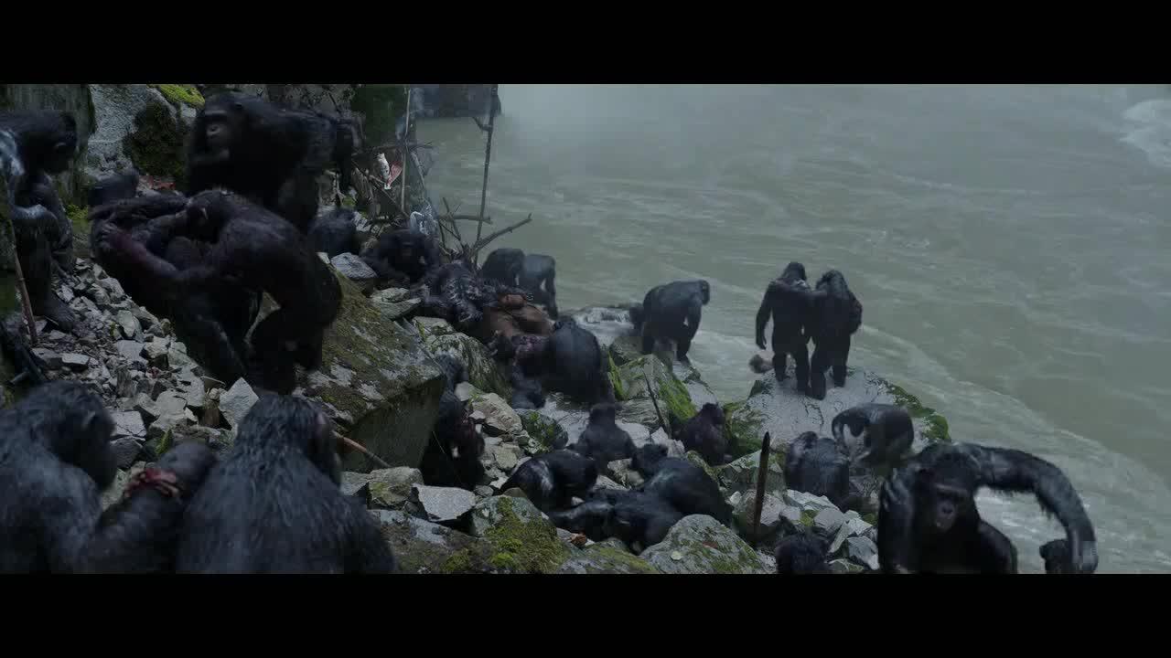 猩猩们在水边休息,听着这个声音后,都紧张起来了