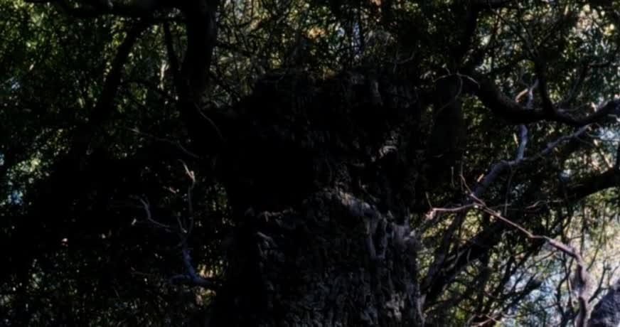 闯入森林狂奔逃 ,魔树爆头绞杀混混