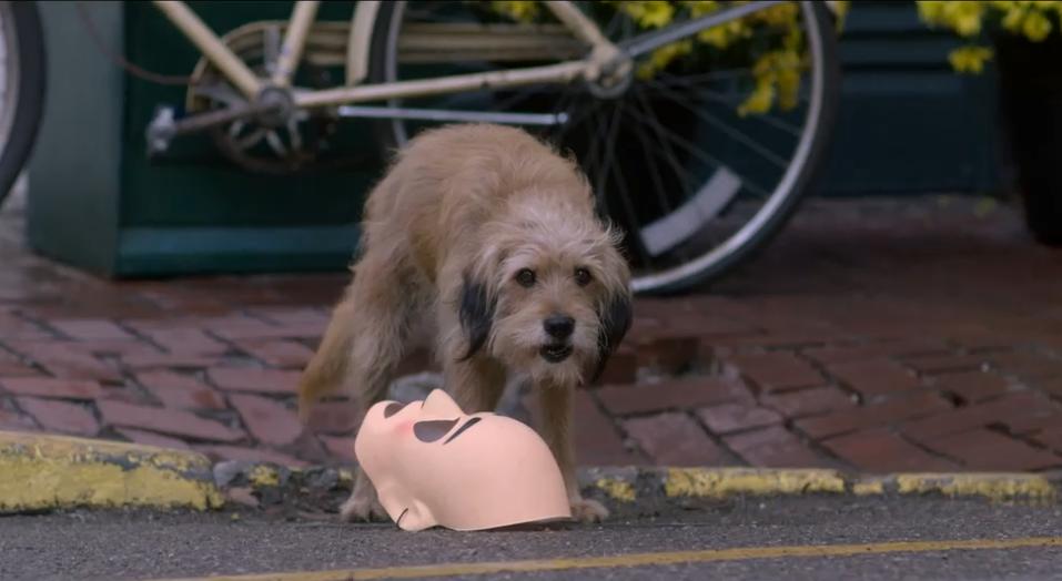 #经典看电影#吃百家饭的流浪狗英勇救人, 也为自己找到了梦寐以求的家