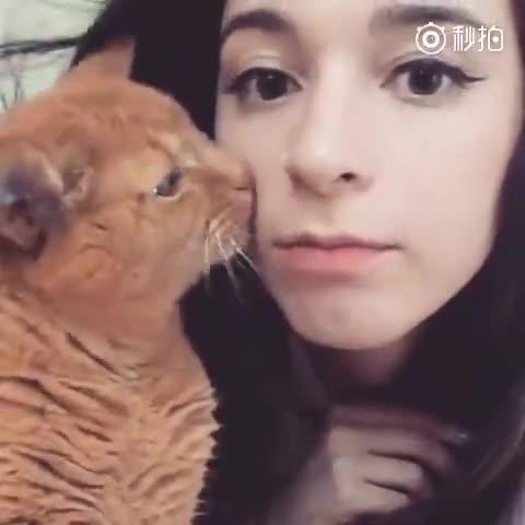 主人咬了一下猫的耳朵,以为会被猫反咬一口,没想到。。。