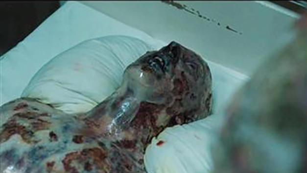 #经典看电影#豆瓣9.6,比恐怖片更瘆人!这部HBO高分神剧吓尿我了!