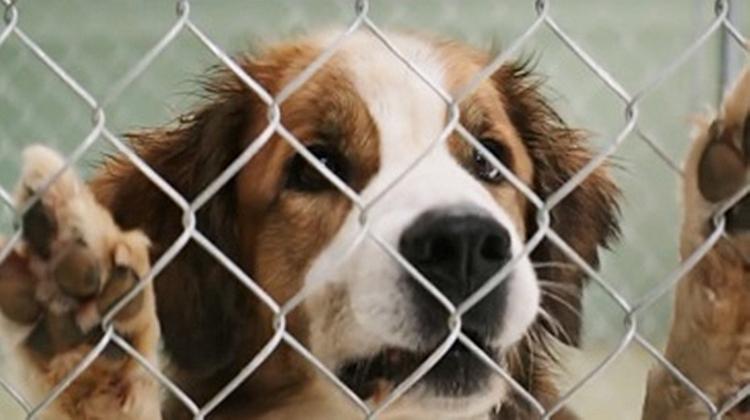 #经典看电影#狗狗被小男孩救回家,多年后狗狗几次转世,靠气味寻找到了小男孩