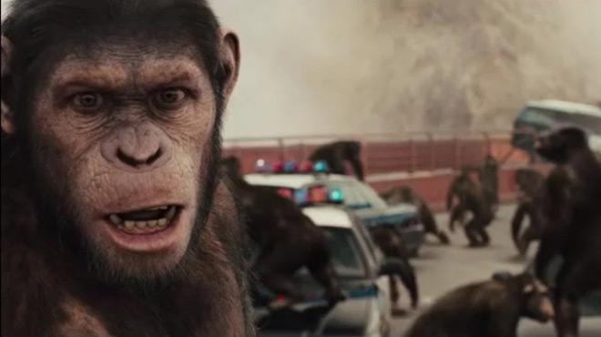 人类与猩猩之间的大战,谁能获胜
