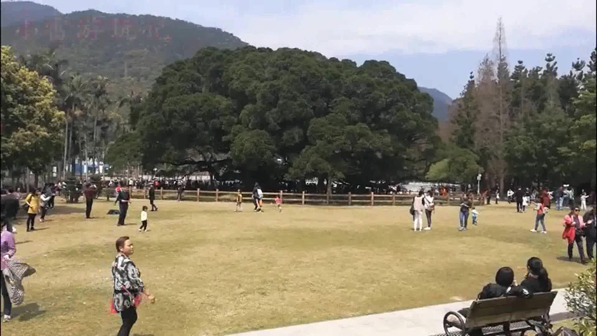 福州国家森林公园游记(一):千年古榕,一睹为快!
