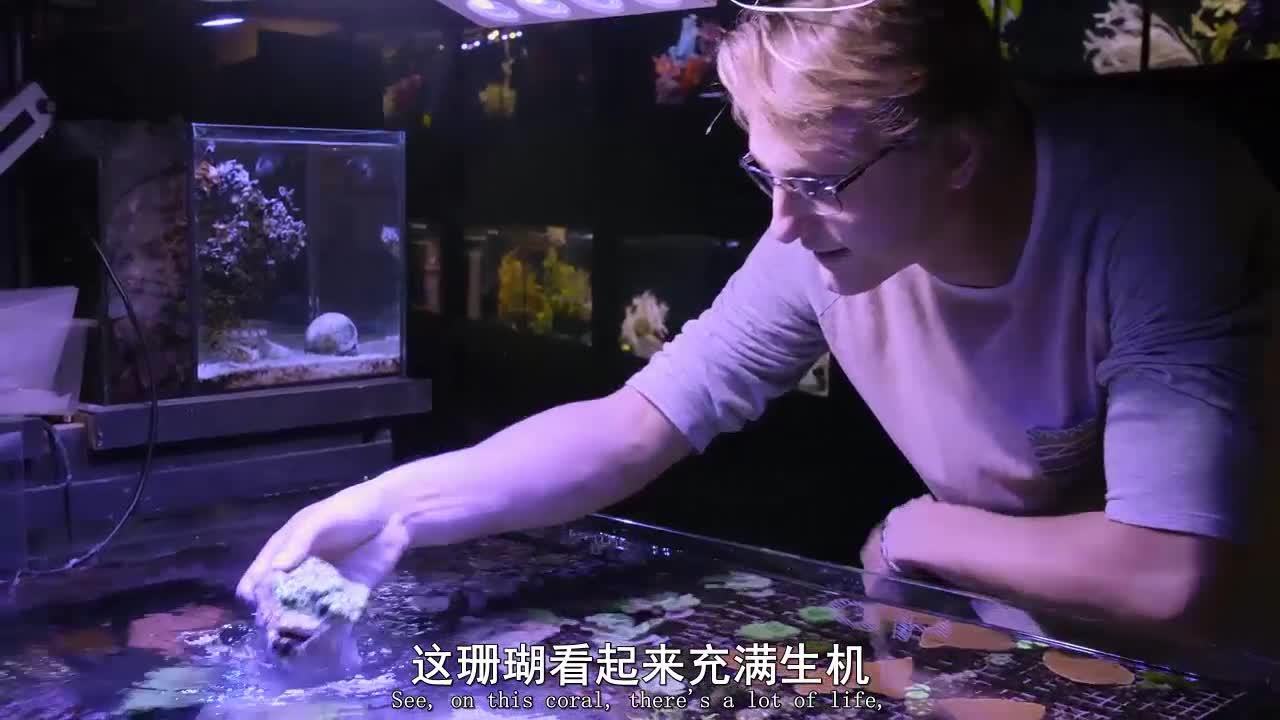 #经典看电影#男孩极度喜欢大堡礁居然在家里制造了一个天然生态系统
