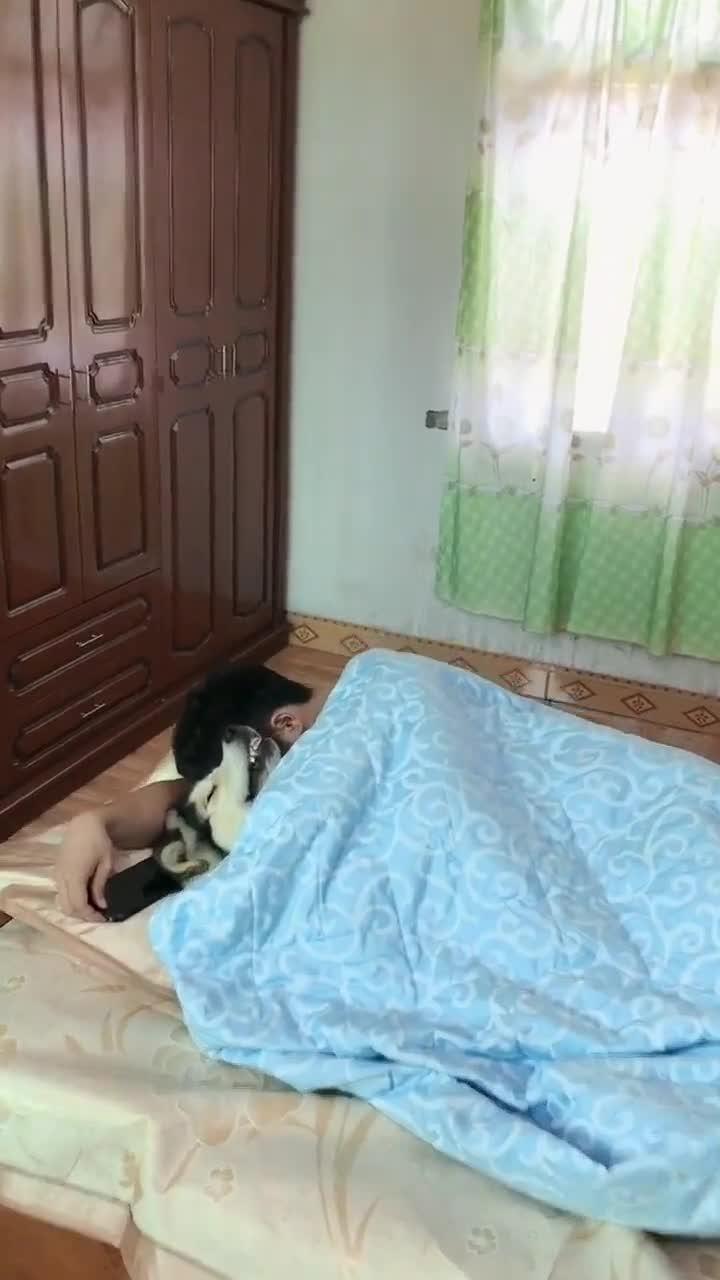 #被子#小伙搂着二哈睡觉,掀开被子的一瞬间,原谅我不厚道地笑了!