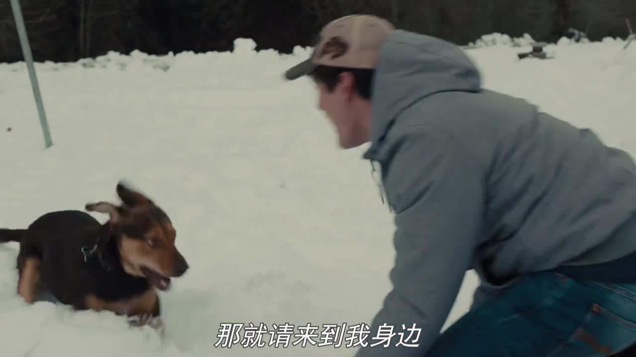 小狗长大,对下雪很是新奇男主带去玩耍,回家得知房东要来