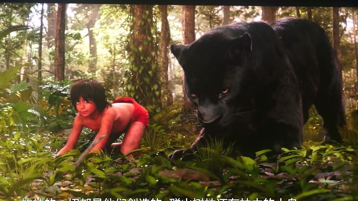 #经典看电影#6岁小孩被野狼黑豹养大,徒手杀死老虎,全程紧张刺激