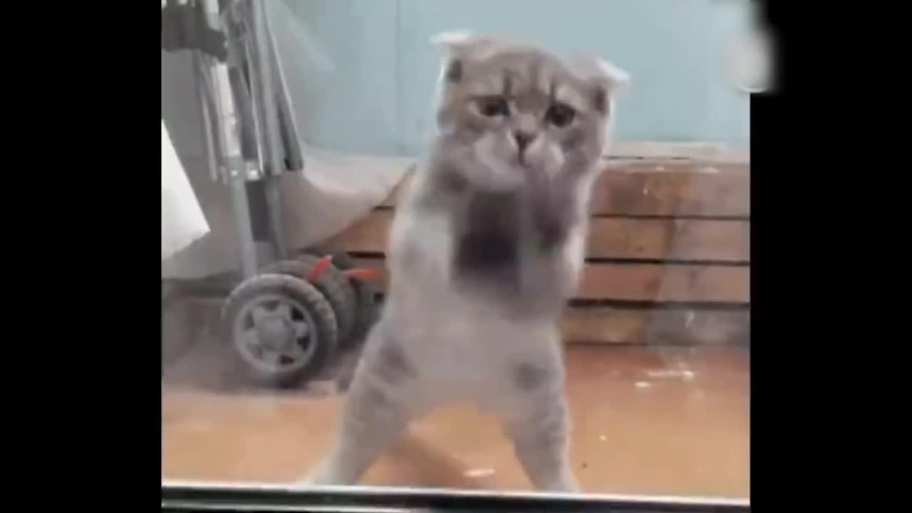 这猫要火,太有音乐节奏感了
