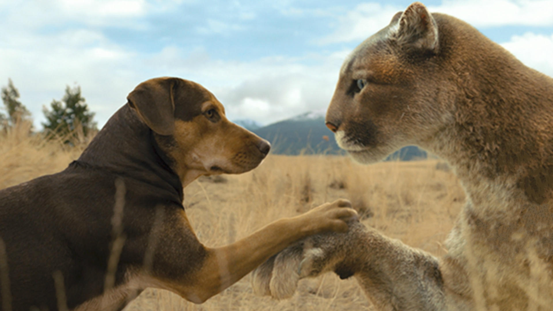 #动物#母狗误把一只幼狮当孩子,养到最后比自己都大,一部温情动物电影