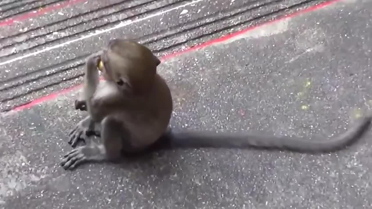 精彩实拍:辣妹被凶恶的猴子拦住去路,太狡猾的小滑头!
