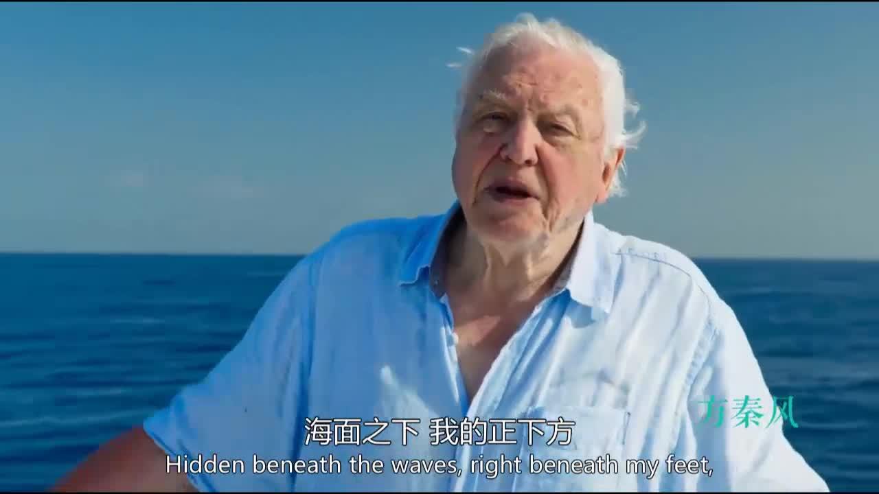 #经典看电影#蓝色星球海洋深处究竟是什么样没人知道他们来了以后便有人知道了