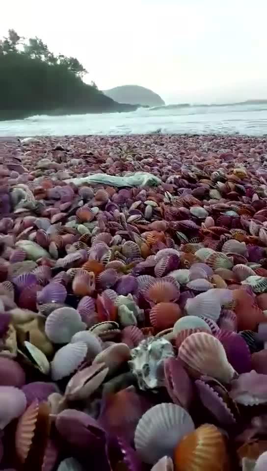 #台风过后的海边#台风过后的海边,立刻变身海鲜市场,太丰富了!