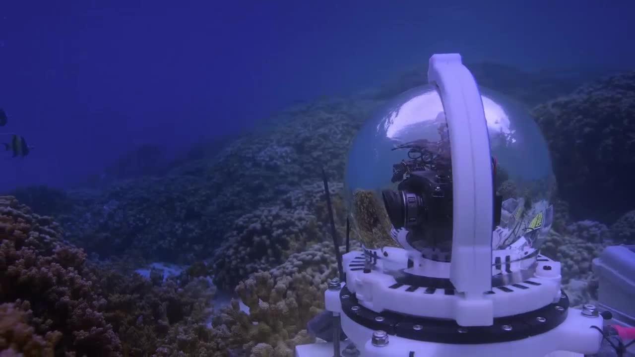 #经典看电影#男孩从小在大堡礁长大回忆里是大多数人没有见过的大堡礁