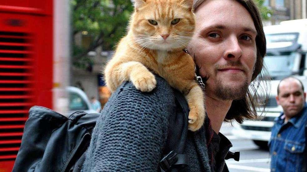 #流行最前线#流浪汉救了一只猫,没想到带来了财运,成为了网红