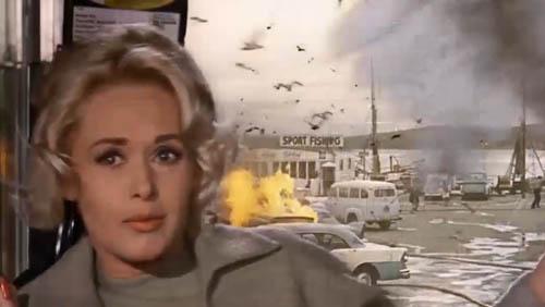 温顺的鸟儿变成杀人恶魔,犹如世界末日,希区柯克代表作