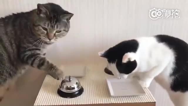 那两只打铃要饭的猫咪座位分清楚了,绝对不会按错铃了