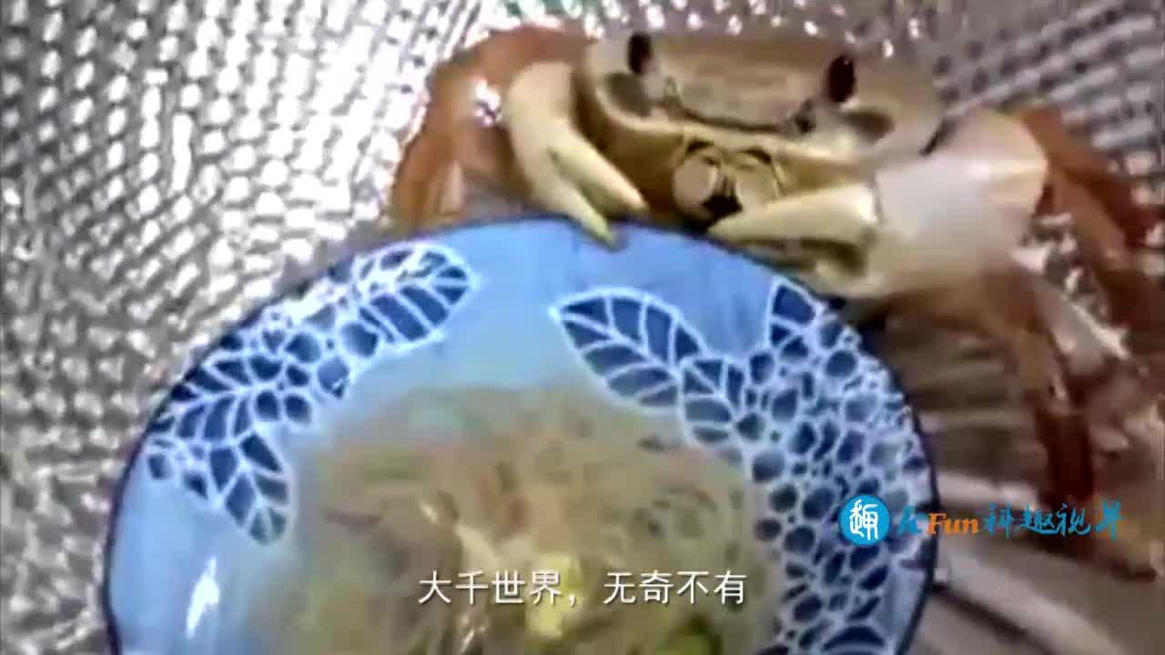 一只吃货螃蟹,面对生死早已看淡,螃蟹:先让我吃碗面再说