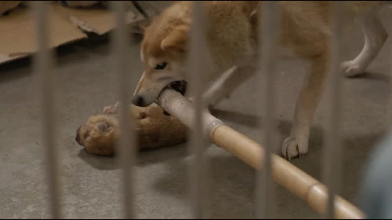 #经典看电影#幼犬被冻死,人类想拿走尸体,却遭到母狗奋力阻止!