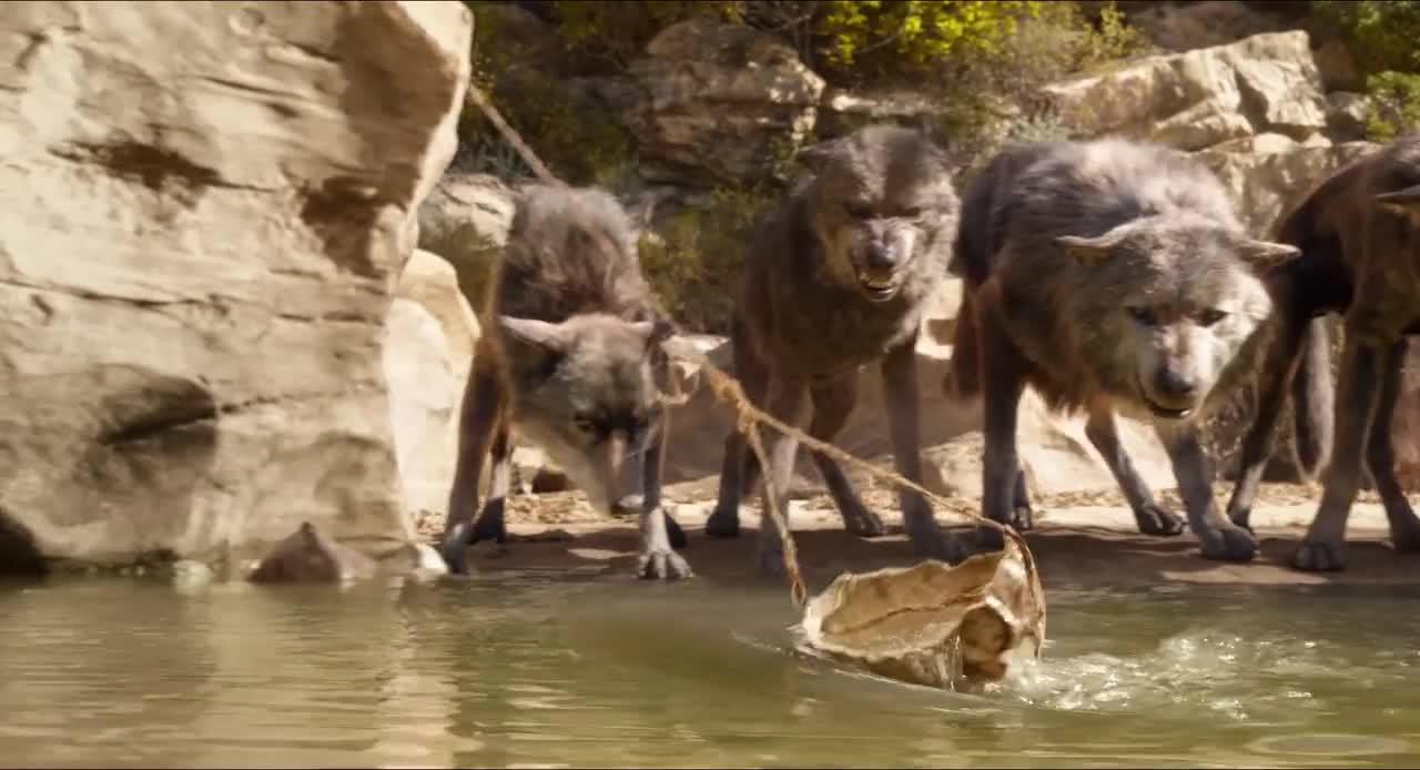 狼孩用瓢喝水,结果被狼王看不起