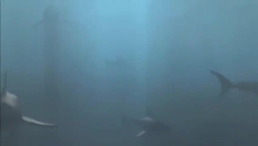 一群人拿小鲨鱼出气,大鲨鱼发怒了让他们没好果子吃