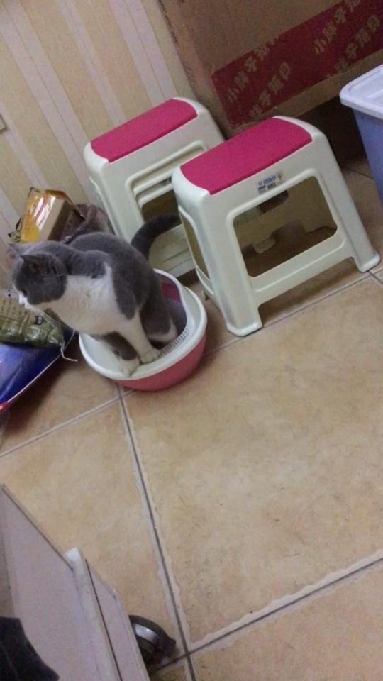 #猫#喵:死变态!这也偷拍我