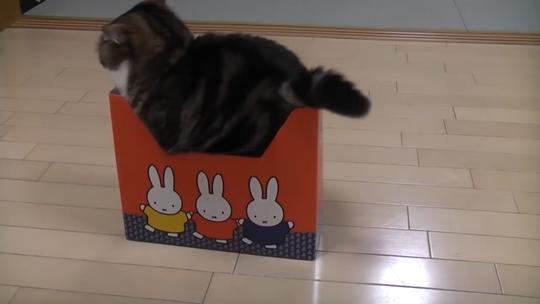 喵:过分了啊给这么小的盒子