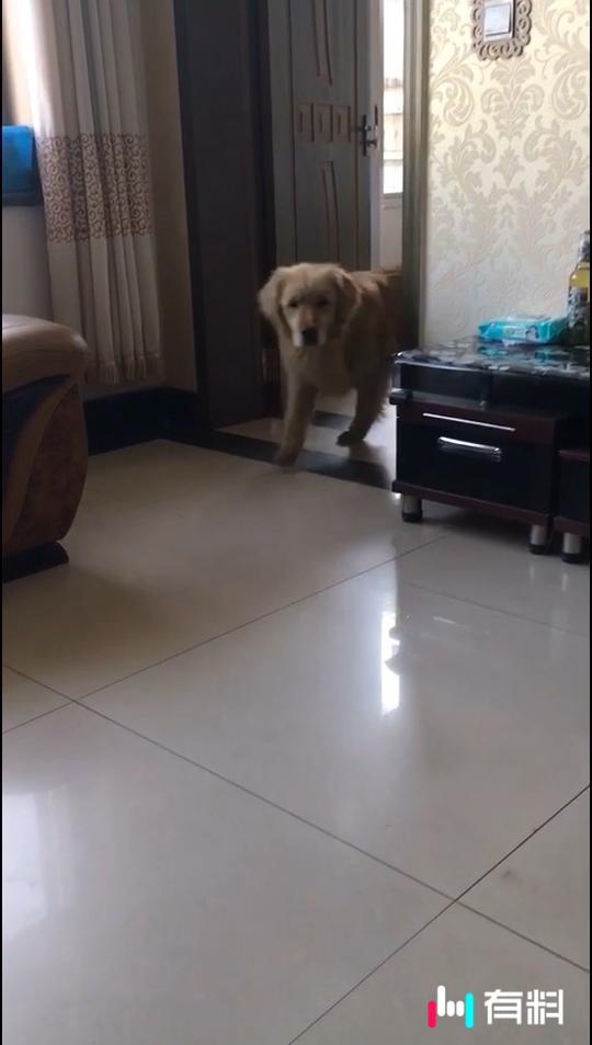 #狗狗#到底该不该滚呢?