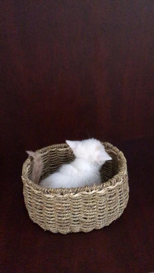 乖乖待在篮子里照相的那是别人家的猫